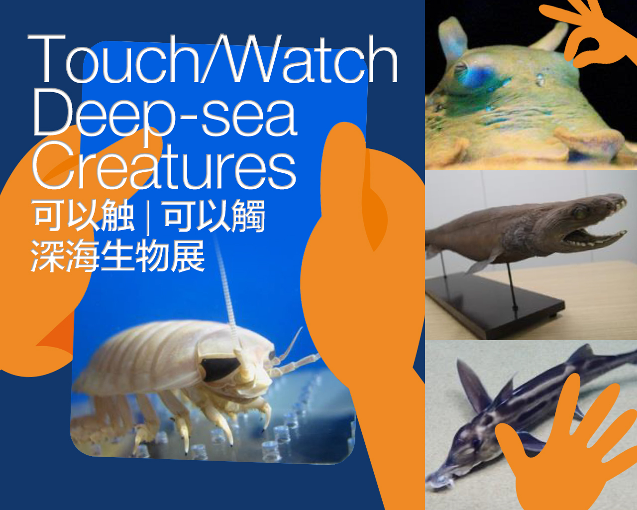 An unknown world of deep-sea creatures exhibition at Sunshine Aquarium