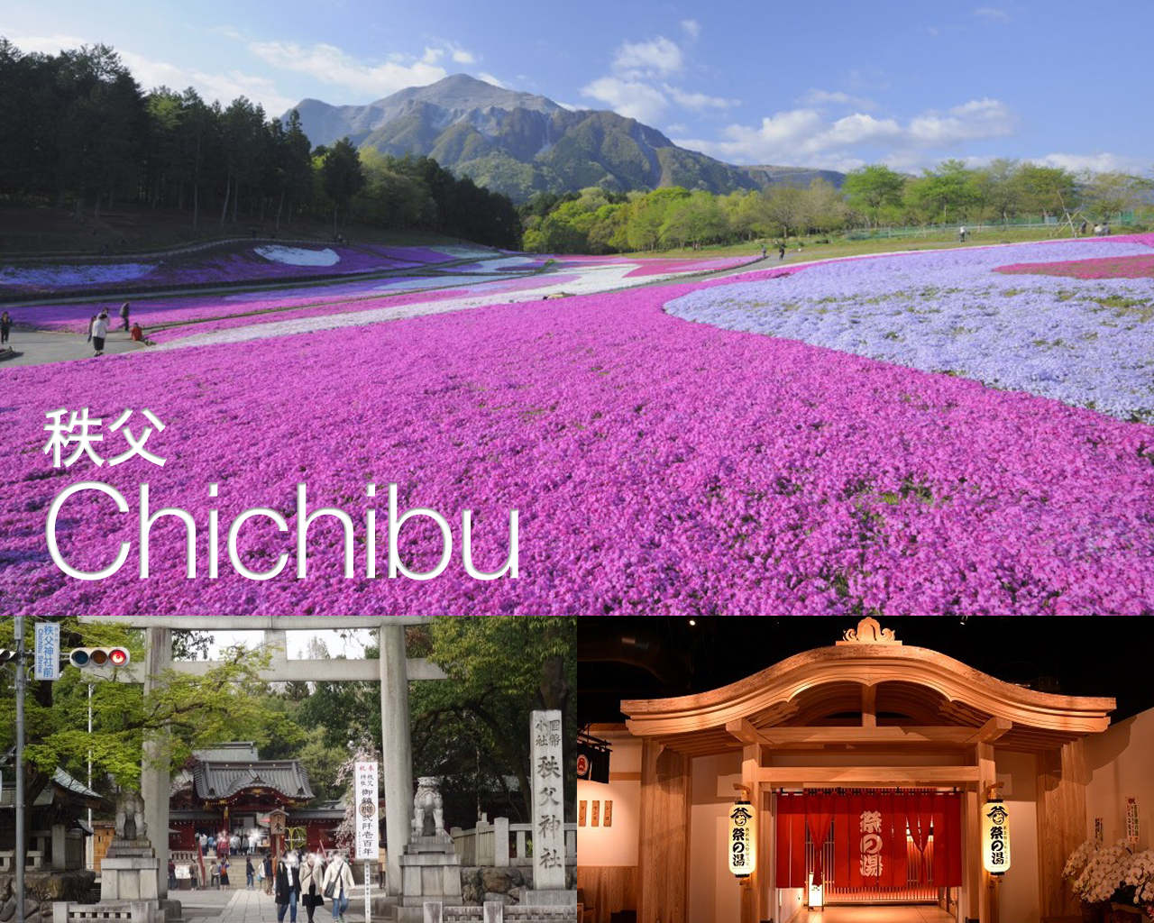 The Spring of Chichibu, special pink-ground in April.